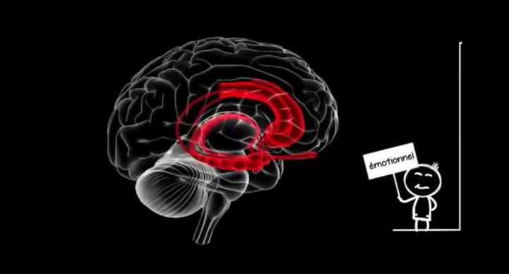 Cerveau d