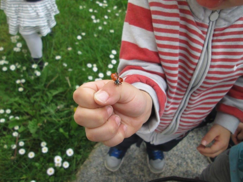 petit enfant qui tient une coccinelle