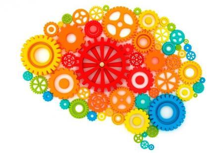 mécanismes du cerveau