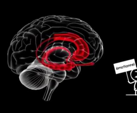 Cerveau d'un enfant