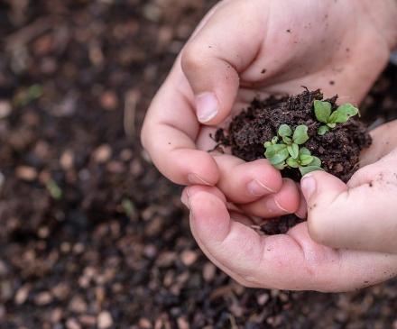 mains enfant jardinage