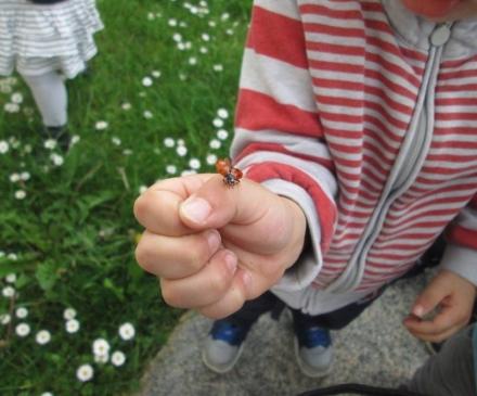 Enfant avec une coccinelle sur la main