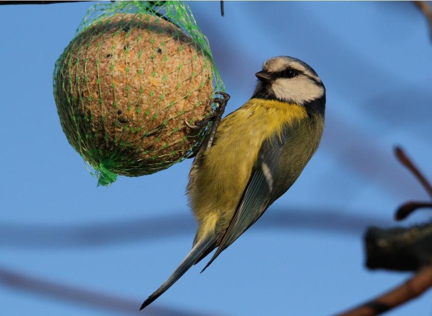 deux diy pour prendre soin des oiseaux l 39 hiver lesprosdelapetiteenfance. Black Bedroom Furniture Sets. Home Design Ideas