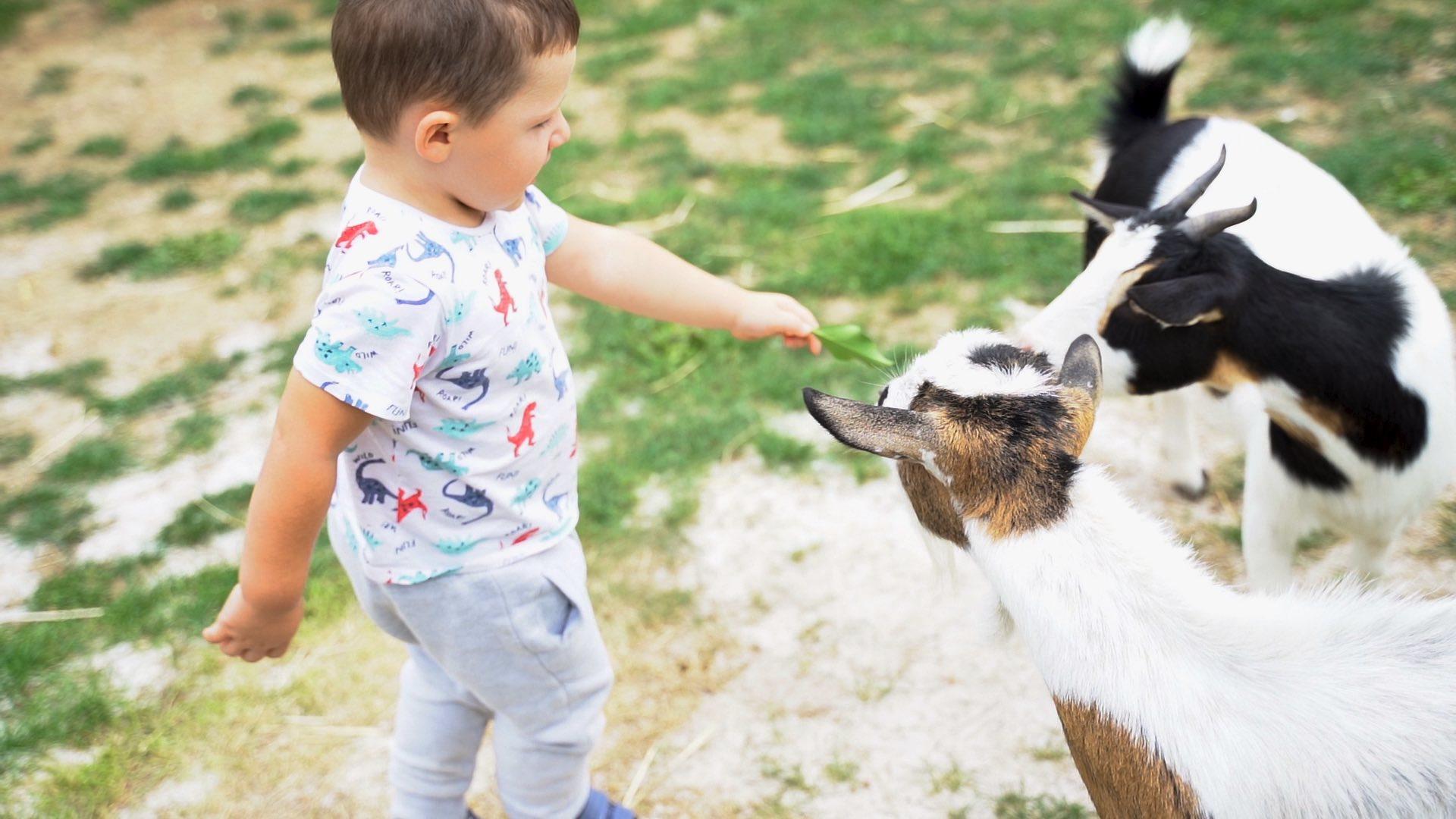 créche de Marcoussis avec chèvre